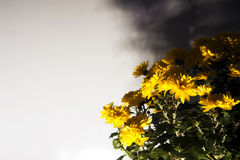 El amarillo florece a Fotografía de archivo