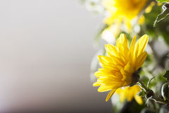 El amarillo florece b Fotos de archivo