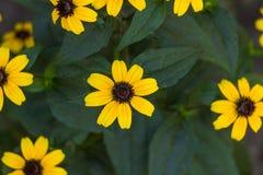 El amarillo florece el fondo Fotografía de archivo libre de regalías