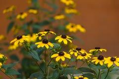 El amarillo florece el fondo Fotografía de archivo