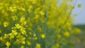 El amarillo florece - el fondo con las flores metrajes