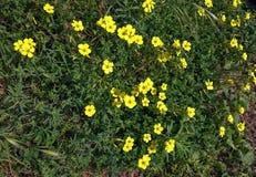 El amarillo florece el marco completo Imágenes de archivo libres de regalías