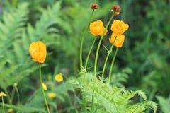 El amarillo florece el fondo de hojas verdes Imágenes de archivo libres de regalías