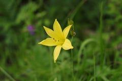 El amarillo florece el fondo de hojas verdes Imagenes de archivo