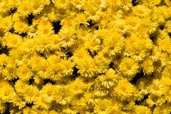 El amarillo florece horizontal Fotografía de archivo libre de regalías