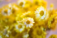 El amarillo florece el ramo foto de archivo