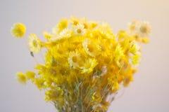 El amarillo florece el ramo imagenes de archivo