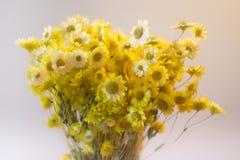 El amarillo florece el ramo Fotografía de archivo libre de regalías