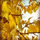 El amarillo hojea composición Fotos de archivo