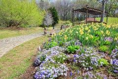 El amarillo púrpura del jardín de la primavera florece Virginia fotos de archivo libres de regalías