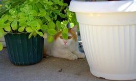 El amarillo precioso observa el gato y los potes Imagen de archivo libre de regalías