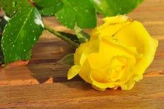 El amarillo recientemente escogido se levantó Foto de archivo
