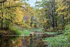 El amarillo sale del bosque hermoso del otoño reflejado en el agua tranquila del río del bosque Fotos de archivo libres de regalías