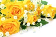 El amarillo se levantó Foto de archivo libre de regalías
