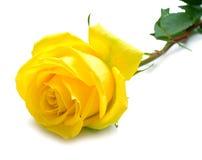 El amarillo se levantó con las hojas verdes Fotos de archivo libres de regalías