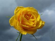 El amarillo se levantó contra el cielo con las nubes foto de archivo