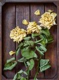 El amarillo se marchitó los pétalos color de rosa Foto de archivo libre de regalías
