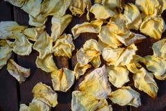 El amarillo se marchitó los pétalos color de rosa Imagenes de archivo