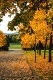 El amarillo se va en árboles del otoño en el sol fotografía de archivo libre de regalías