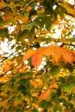 El amarillo se va en árboles del otoño en el sol imagen de archivo libre de regalías