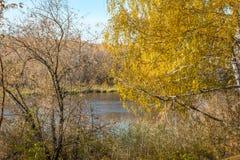 El amarillo se va en el abedul cerca de la orilla del río Foto de archivo