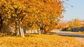 El amarillo se va en los árboles a lo largo del camino rural imagenes de archivo