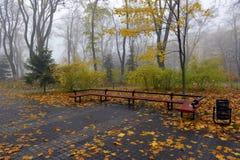 El amarillo se va en un banco en el parque Fotos de archivo libres de regalías