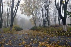 El amarillo se va en un banco en el parque Hoja Fotografía de archivo