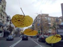 El amarillo se va en el vidrio del coche, calle de la ciudad Fotografía de archivo libre de regalías