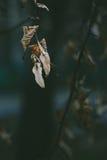El amarillo seco se va en una macro del primer del árbol Foto de archivo