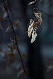 El amarillo seco se va en una macro del primer del árbol Imagen de archivo libre de regalías