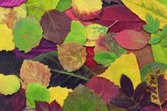 El amarillo, verde y el rojo sale de árboles y de otras plantas Imagen de archivo libre de regalías