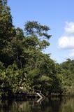 El Amazonas Fotos de archivo