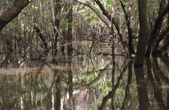 El Amazonas: Dentro de la selva inundada Foto de archivo libre de regalías