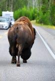 El amblar abajo del camino de Yellowstone Foto de archivo