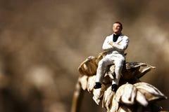 El amo de la cosecha del trigo Imagen de archivo libre de regalías