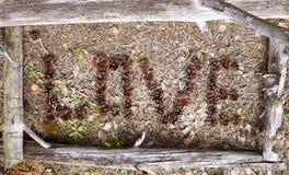El amor de la palabra del abedul viejo ramifica en un marco Fotografía de archivo libre de regalías