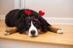 El amor de una pequeña tarjeta del día de San Valentín Fotos de archivo libres de regalías