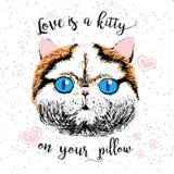 El amor es un gatito en su almohada, cita del amor sobre animales domésticos Imagen de archivo