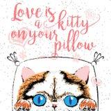 El amor es un gatito en su almohada, cita del amor sobre animales domésticos Imagen de archivo libre de regalías