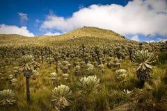 El Angel, ecological reserve, Carchi, Ecuador Stock Photos