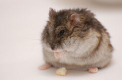 El animal doméstico Fotos de archivo libres de regalías