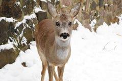 El animal le gusta la gente Foto de archivo libre de regalías