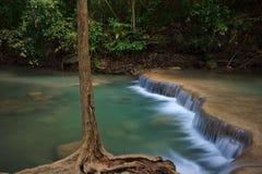 El apalache de la raíz del árbol, ramifica, en la cascada Fotos de archivo
