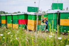 El Apiarist, apicultor está comprobando abejas en marco de madera del panal Imagenes de archivo