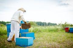 El Apiarist, apicultor está comprobando abejas en marco de madera del panal Foto de archivo