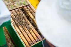 El Apiarist, apicultor está comprobando abejas en marco de madera del panal Fotos de archivo libres de regalías