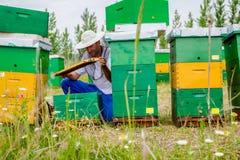 El Apiarist, apicultor está comprobando abejas en marco de madera del panal Imagen de archivo libre de regalías