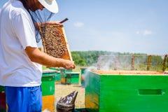 El Apiarist, apicultor está comprobando abejas en marco de madera del panal Foto de archivo libre de regalías