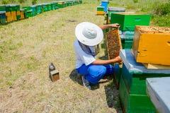 El Apiarist, apicultor está comprobando abejas en marco de madera del panal Fotografía de archivo libre de regalías